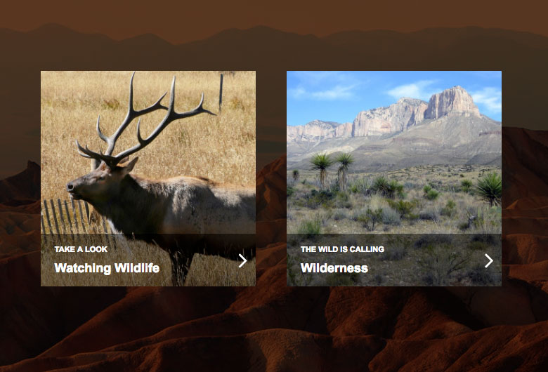 Screenshots of website promos related to wildlife and the wilderness.